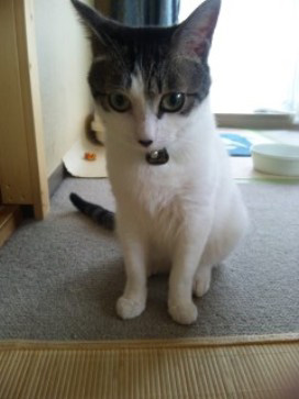猫用ペットタグモニター