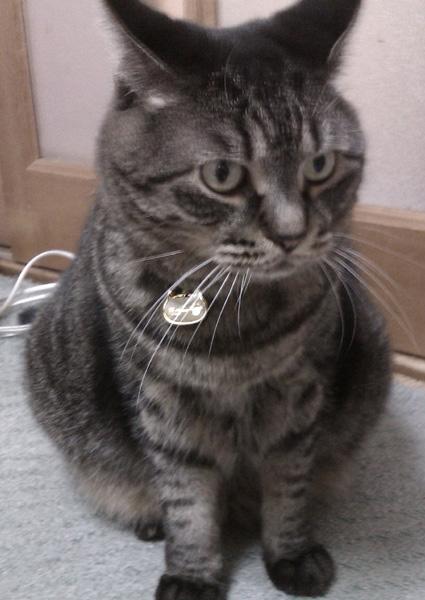 ペットタグのモニター ミューちゃん